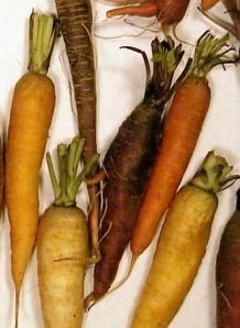 les variétés de carotte